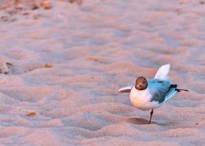 balance-seagull